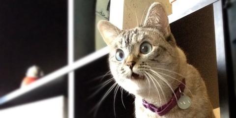 o-CATS-facebook