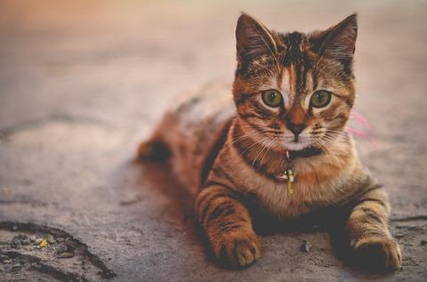 cat-1245673_640