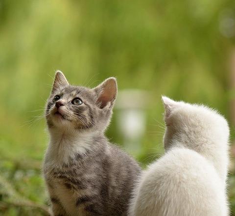 cat-2273598_640