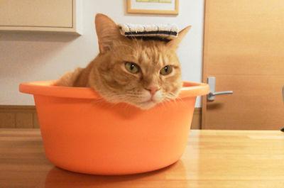 桶に入った猫