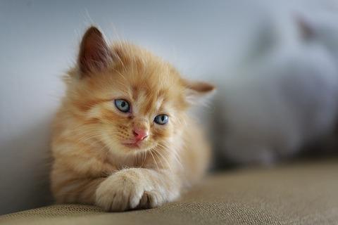cat-3266673_640