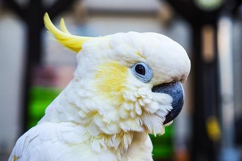 parrot-2509677_640