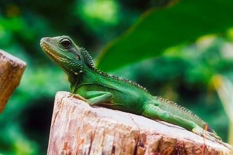 lizard-2263348_640
