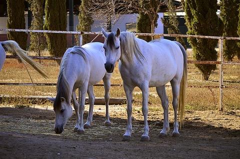 horse-3434688_640