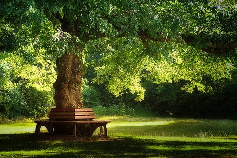 tree-3204332__340