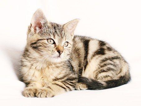 cat-1192026__340