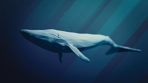 blue-whale-3158626_640