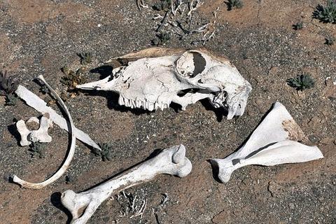 bones-3670740__340