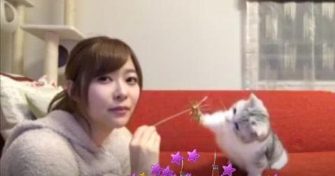 指原莉乃と遊ぶ猫がかわいいww