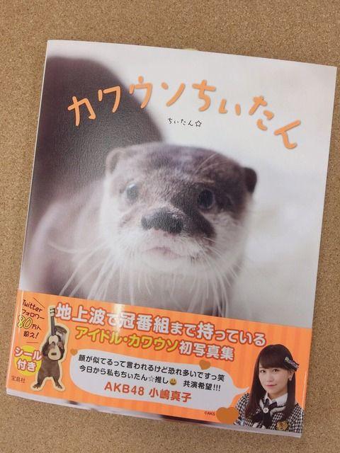 小嶋真子さんがカワウソ界のアイドル「カワウソちぃたん」の初写真集の帯を書く・・・