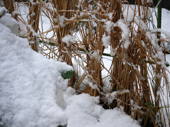 庭のミニ菜園雪ですっぽり