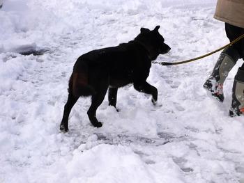 雪の白色と黒色のコントラスト