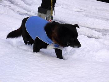 雪の中ラッキーNO2