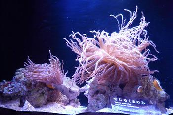 さんご礁のいきもの