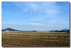 自宅前の田園風景・・・2012年1日