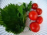 ミニトマト、トマト中玉 フルティカ、大葉、ルッコラ