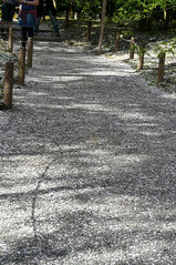 桜の絨毯・・・2