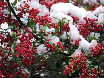 ピラサンカと雪