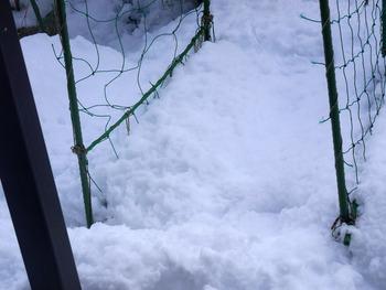庭のミニ菜園雪で見えない!!