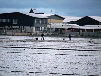 今年1月4日初雪ラッキー散歩