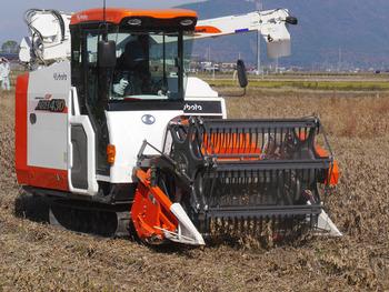 大豆を収穫している。1