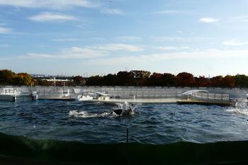イルカが泳いでいる。