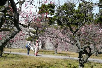 梅と着物姿は、観光の方