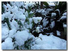 野菜達も雪の中・・・