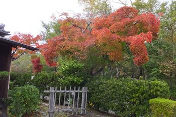 7.ここの紅葉が一番きれいでした。