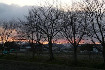 24日の桜並木の朝焼けです。