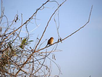 木に鳥が止まっています