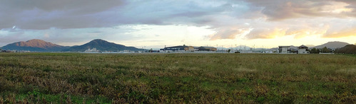 自宅前の大豆畑