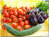 収穫(ミニトマト、茄子、ゴヤー)