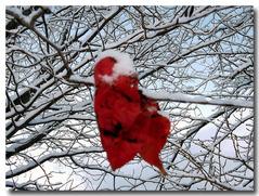 さくらの木と桜の葉赤く紅葉・・・
