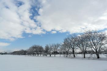 桜並木青空