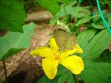 ゴヤーの花と蝶