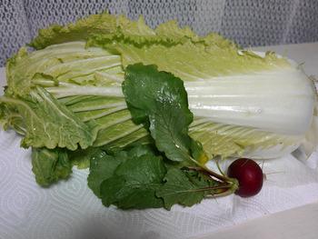 たけのこ白菜とカラフル二十日大根1個収穫