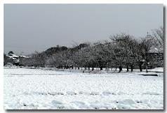 桜並木道も雪・・・