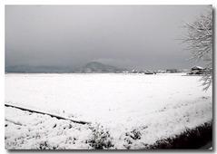 雪の自宅前の田んぼの風景・・・1.5