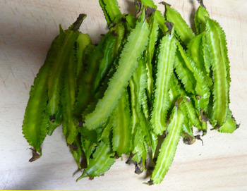 四角豆10月2日収穫