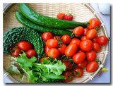 ミニ菜園・・・30日収穫