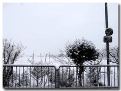 30日自宅前の雪景色・・・