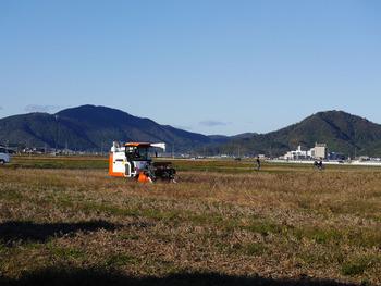 大豆畑収穫