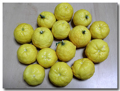 たくさんの柚子もらいました。