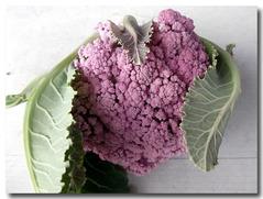 紫カリフラワー収穫