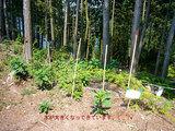 国有林の中に植林した木達