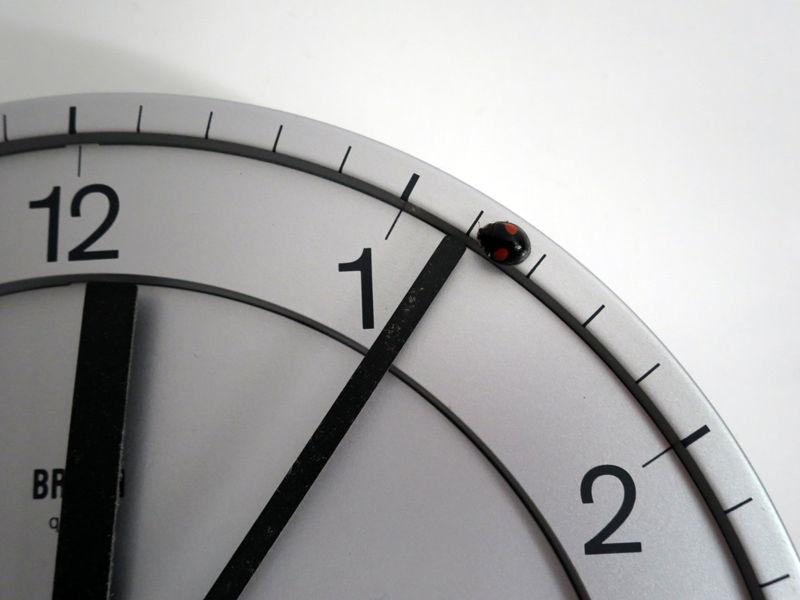 140913時計のテントウムシ
