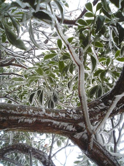 樹氷1.jpg