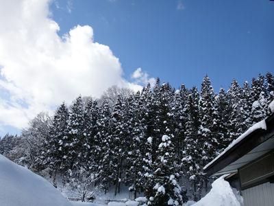 阿仁前田杉山