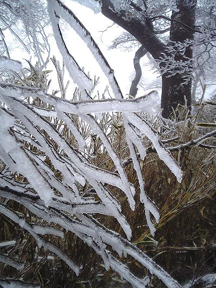 樹氷2.jpg